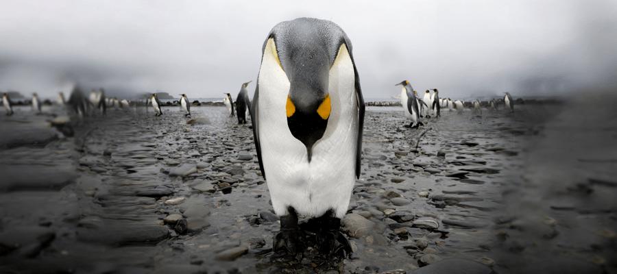 Kritischer Fehler gefährdet alle Linuxrechner
