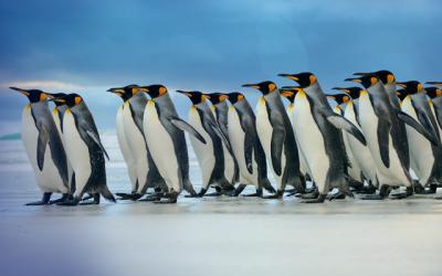 Linux-Server über OpenSSH-Backdoors mit 21 verschiedenen Malware Familien infiziert